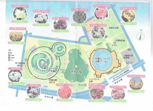八幡屋公園―2 (500x363).jpg